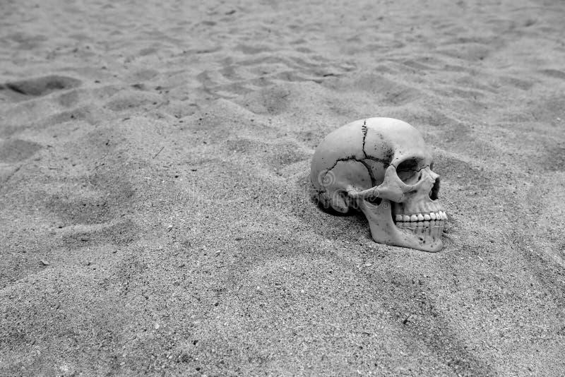 Skull stock photos