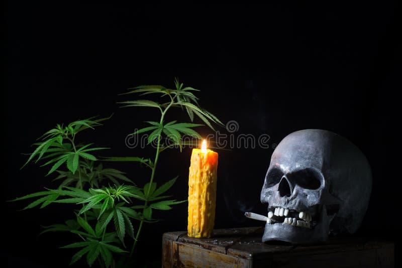 Skull Smoking Cannabis royalty free stock images