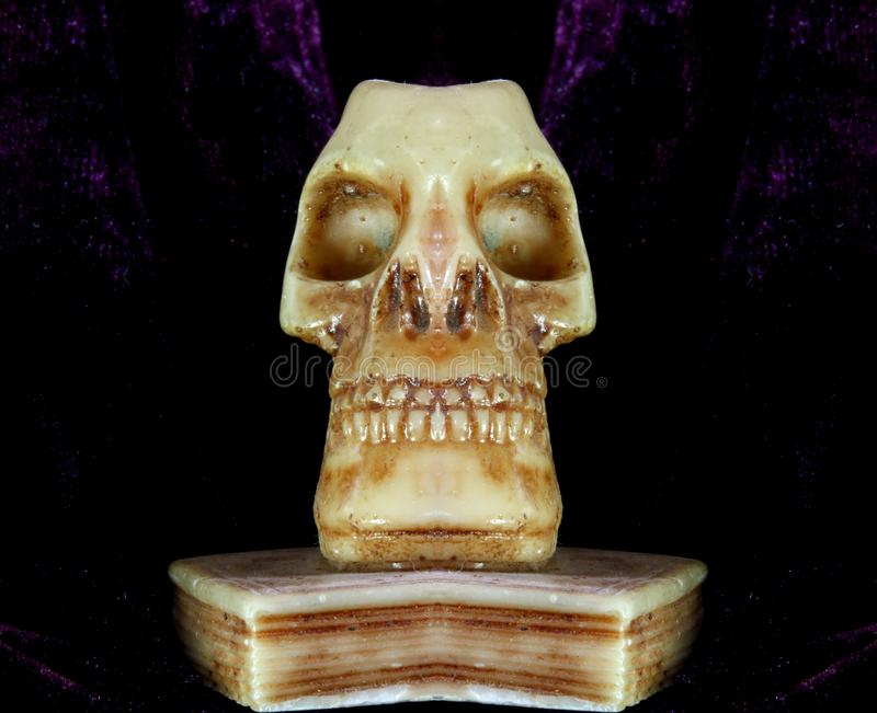 Skull With Teeth And Eye Orbits Stock Image Image Of