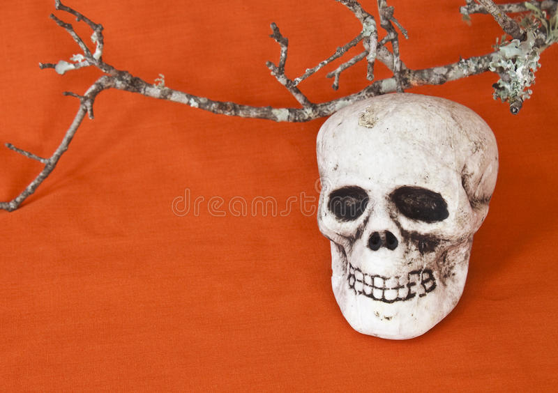 Skull under a dead branch. With an orange background royalty free stock images