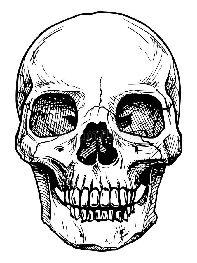 Skull. Vector black and white illustration of human skull with a lower jaw in ink hand drawn style