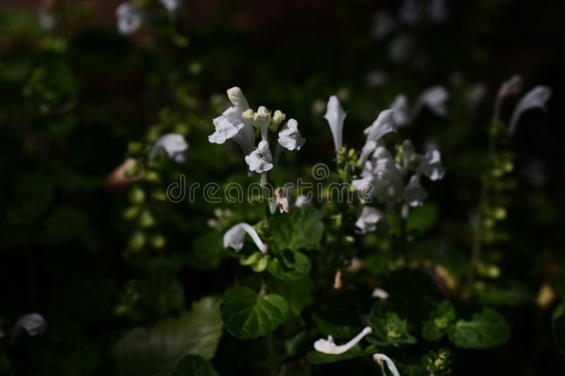 Skullcap Stock Images - Download 1,514 Royalty Free Photos