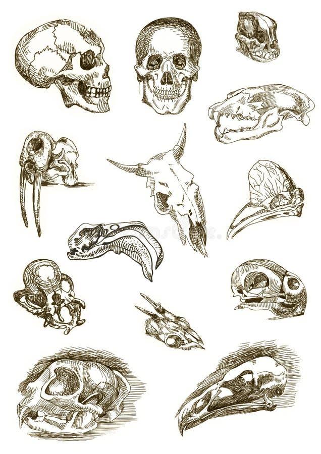 Skulls. Several types of cartoon skulls - marker on white paper royalty free illustration