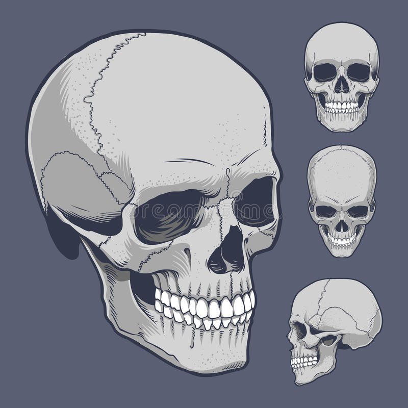 Skulls stock images