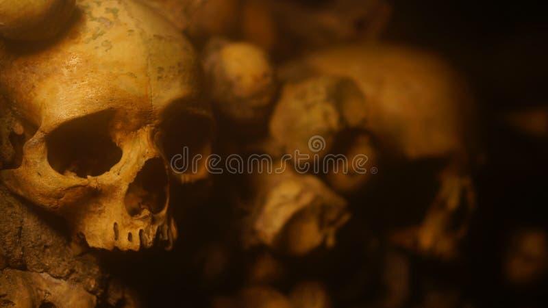 Skulls royalty free stock photos