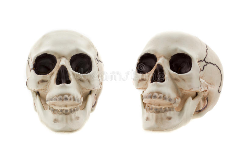 Skulls royalty free stock photography