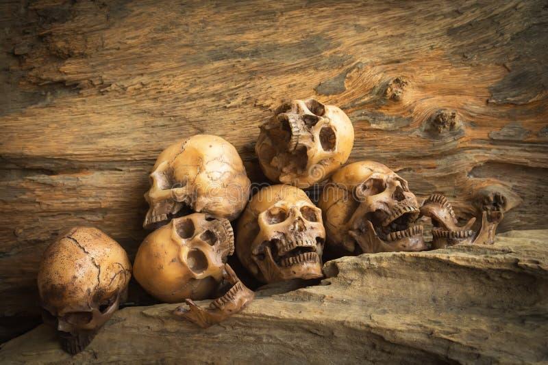 Skulls on wood background royalty free stock photos