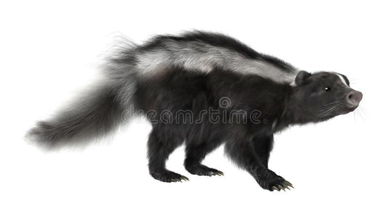 skunk ilustração stock