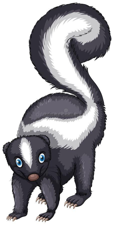 skunk ilustração do vetor