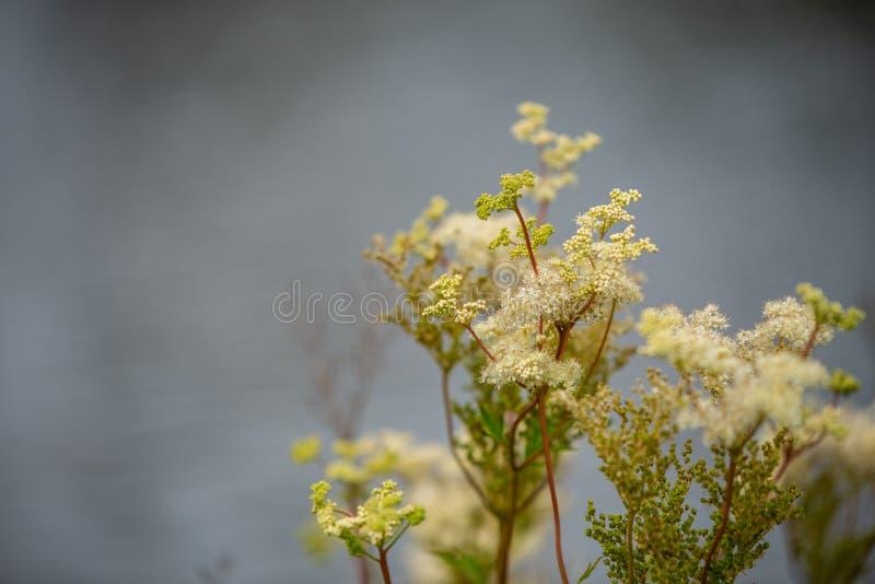 Skupia się na kwiatach i roślinach z pięknymi kolorami zdjęcie stock