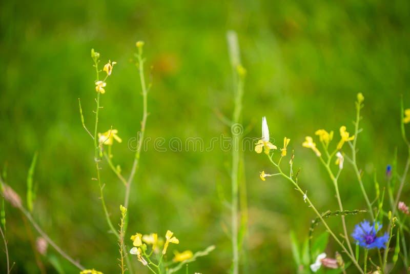 Skupia się na kwiatach i roślinach z pięknymi kolorami zdjęcie royalty free