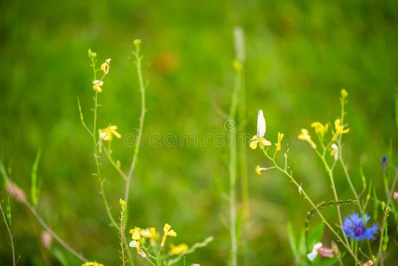 Skupia się na kwiatach i roślinach z pięknymi kolorami fotografia royalty free