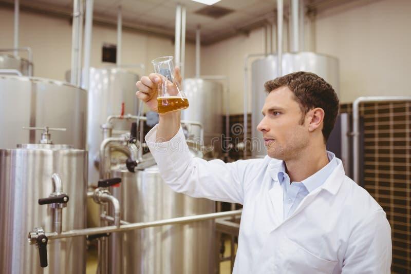 Skupiający się piwowar egzamininuje zlewkę z piwem zdjęcia royalty free