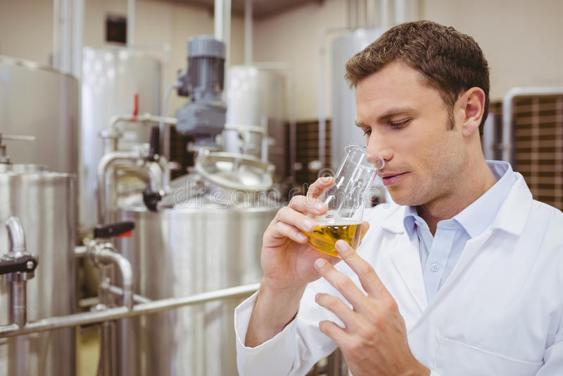 Skupiający się piwowar wącha zlewkę z piwem obraz royalty free