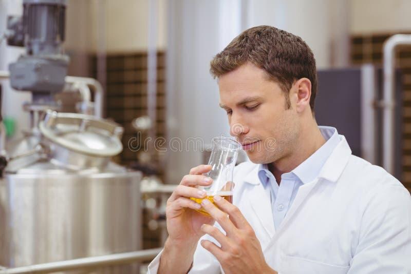 Skupiający się piwowar wącha zlewkę z piwem zdjęcie stock