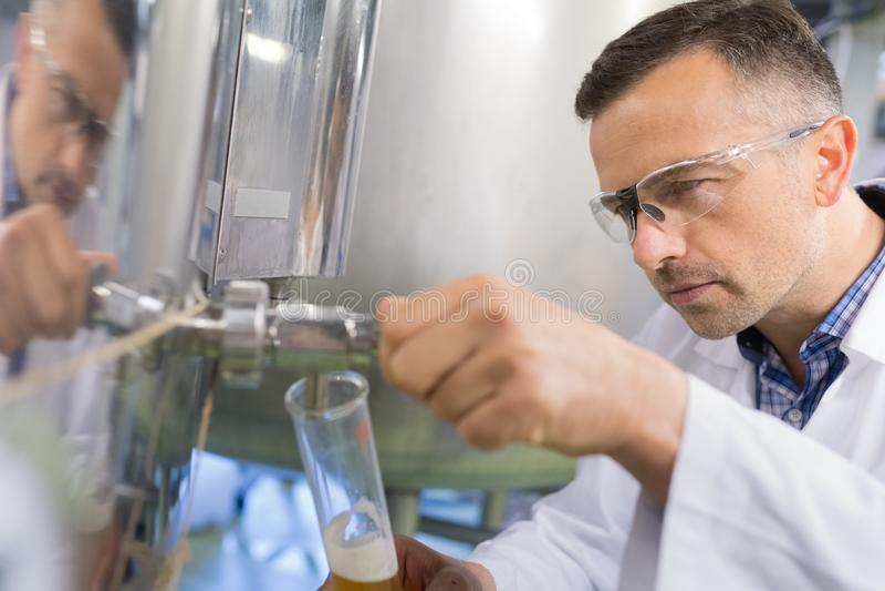 Skupiający się piwowar wącha zlewkę z piwem w fabryce obrazy stock