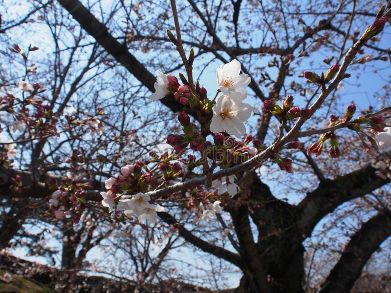 Skura大阪神西日本旅行 免版税库存照片