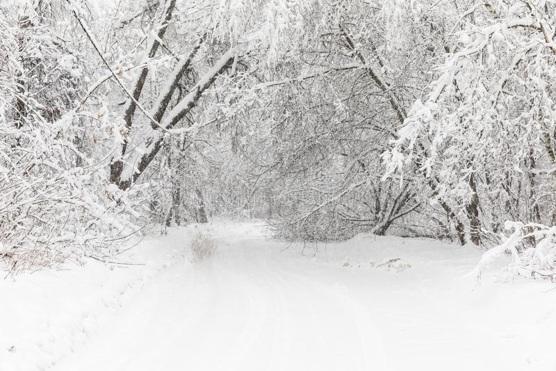 Skurkrollsnowfall i Moscow Snö-täckte vägar och stupade träd under ett snöfall Kollaps av kollektivtrafik arkivfoto