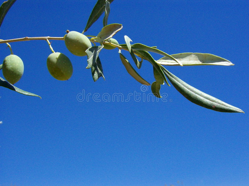 Download In the sky stock image. Image of nature, olives, close - 100773