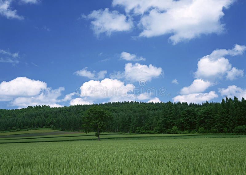Download Sky stock image. Image of urban, seasonal, empty, land - 12365369