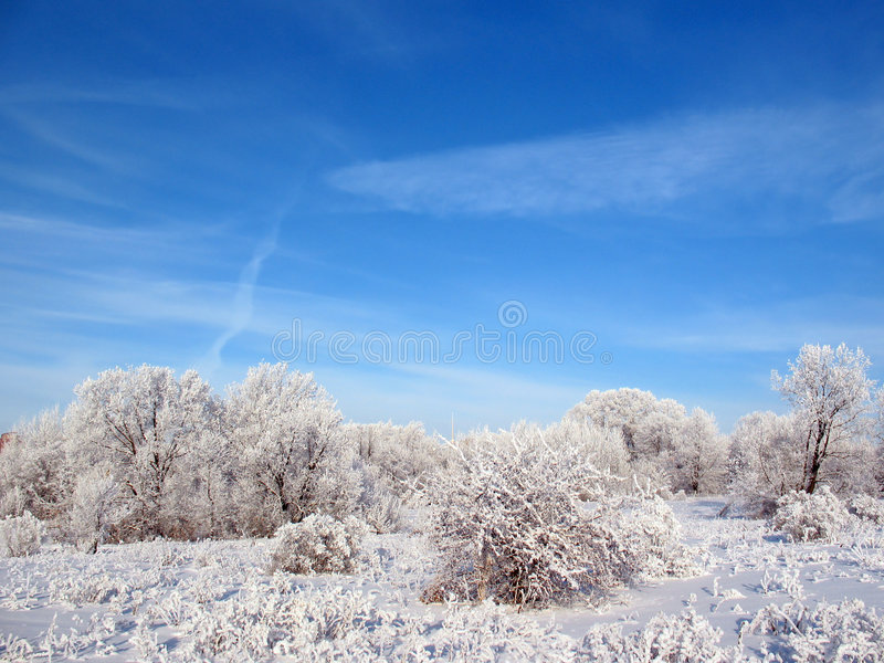 Download Sky stock image. Image of branch, fluffy, blue, open, dirty - 3851857