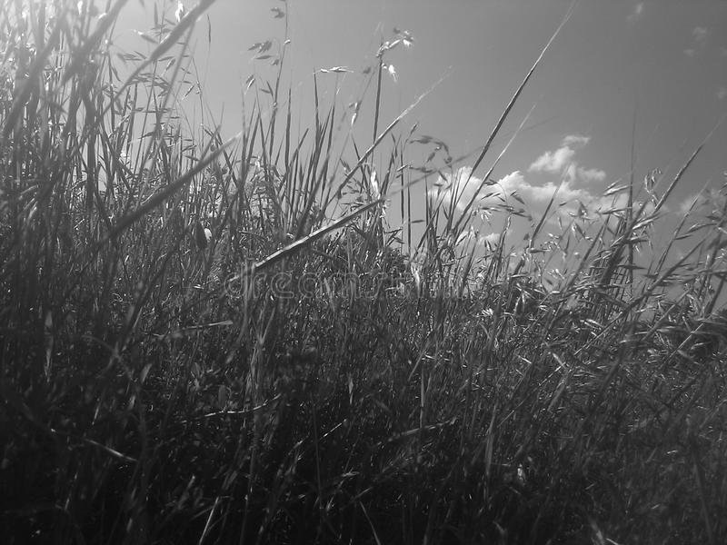 SKY ABOVE GRASS stock images