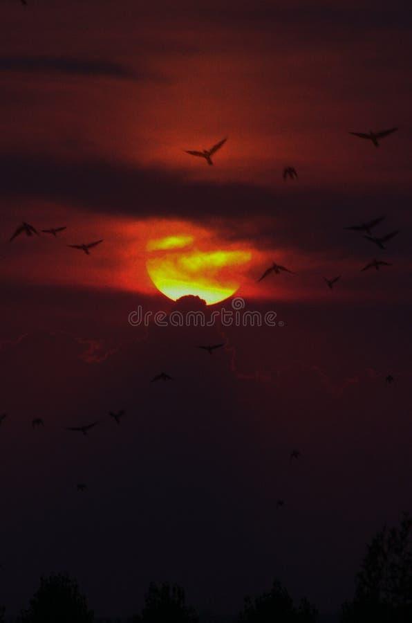 Sky, Afterglow, Sunrise, Atmosphere Free Public Domain Cc0 Image