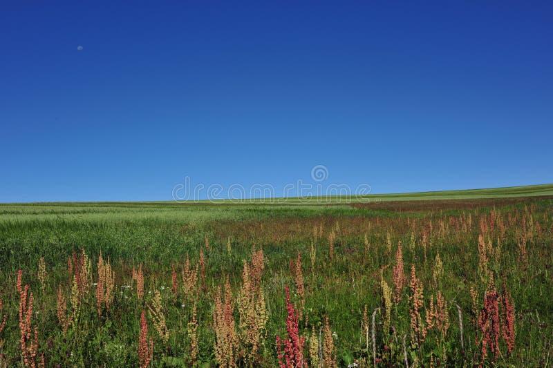 Sky&grassland fotografia stock