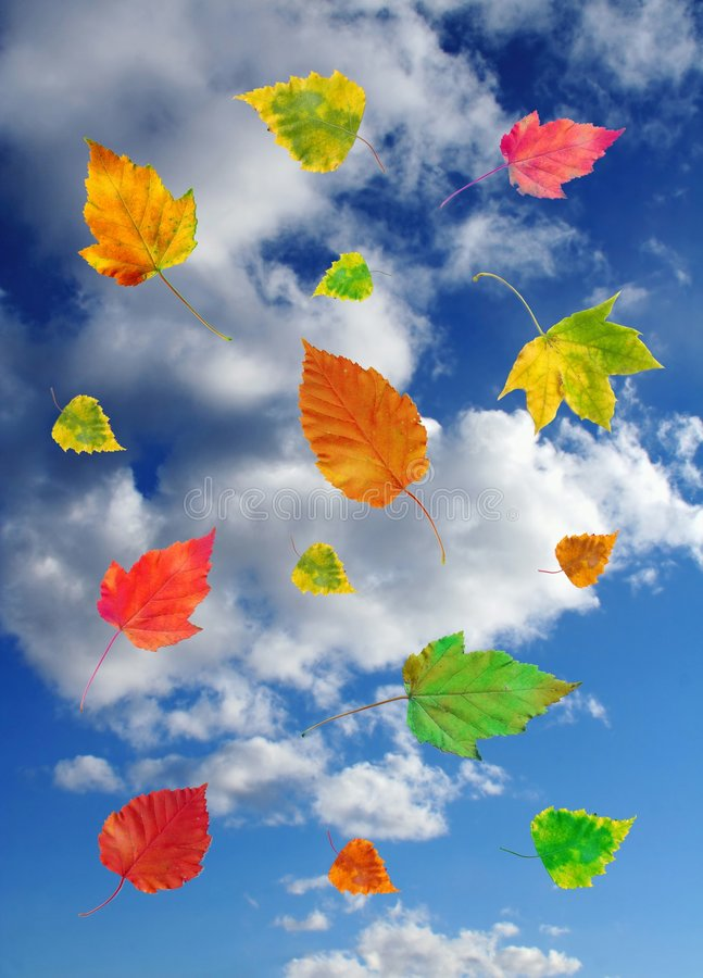 Sky and autumn leaves royalty free stock photo