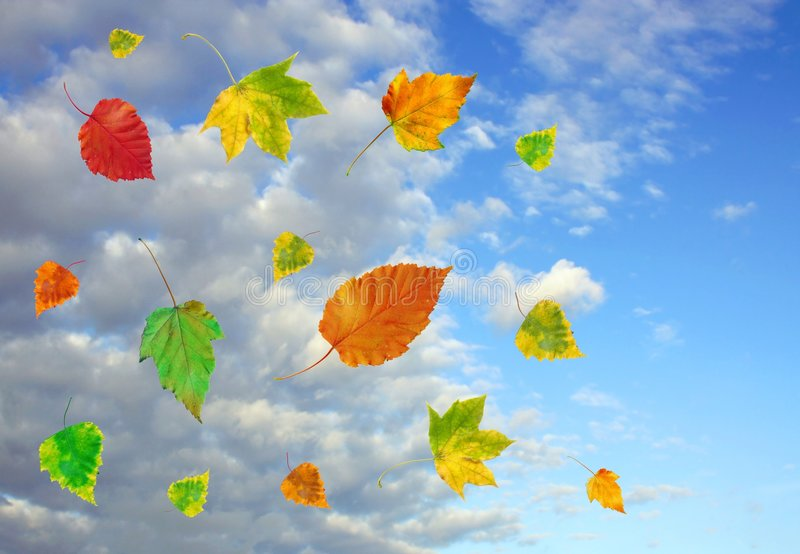 Sky and autumn leaves royalty free stock photos