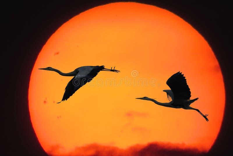 Sky, Beak, Computer Wallpaper, Orange royalty free stock image