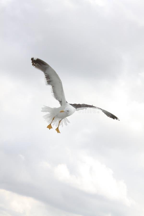 Sky, Bird, Beak, Seabird Free Public Domain Cc0 Image