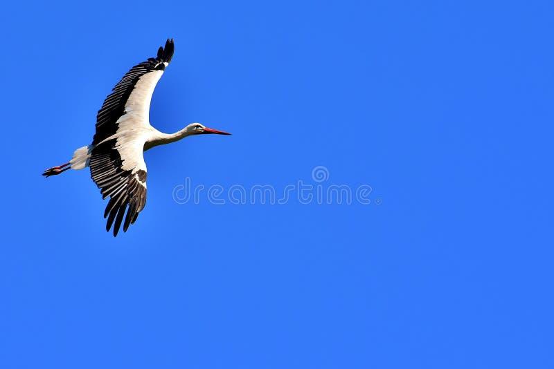 Sky, Bird, Beak, Stork Free Public Domain Cc0 Image