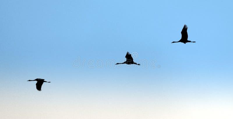 Sky, Bird, Bird Migration, Flight Free Public Domain Cc0 Image