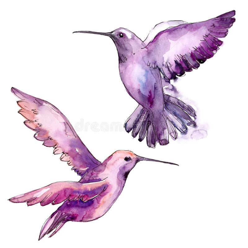 Sky bird colibri in a wildlife isolated. Watercolor background set. Isolated hummingbird illustration element. royalty free stock image