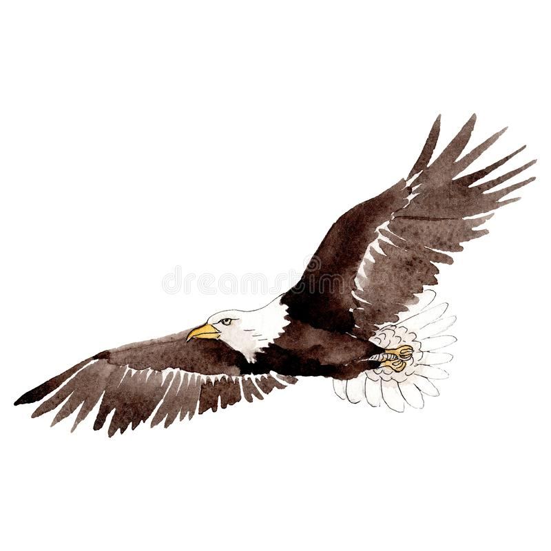 Sky bird eagle in a wildlife by watercolor style isolated. Background, texture, pattern, frame. stock illustration
