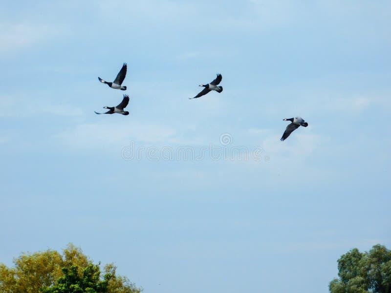 Sky, Bird, Flock, Bird Migration Free Public Domain Cc0 Image
