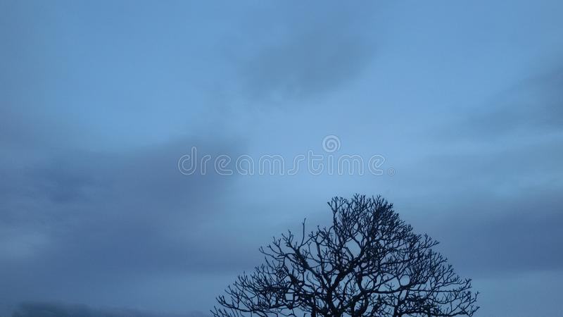 Sky blue background with dead tree branch to the Christmas royalty free stock photos