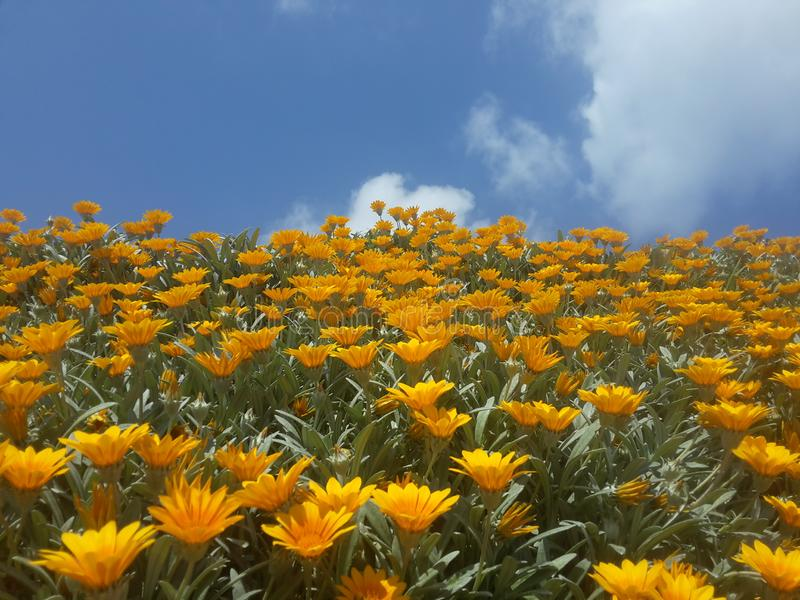 Sky blue flowers yellow clouds royalty free stock images