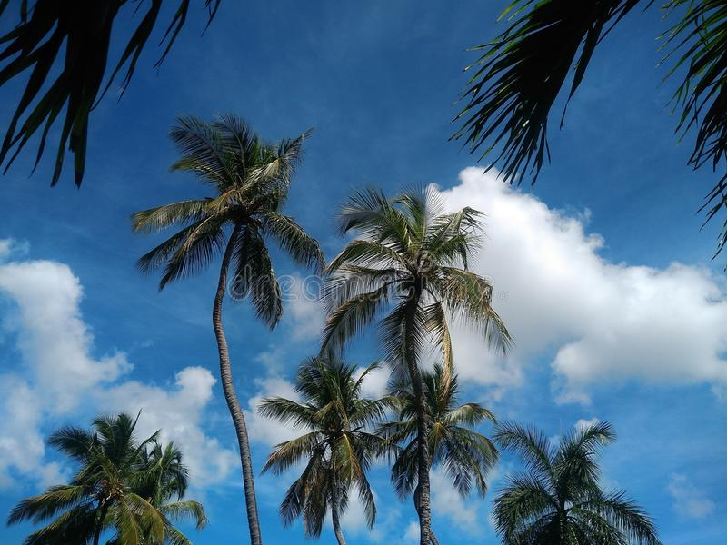 Sky, Blue, Tree, Nature stock image
