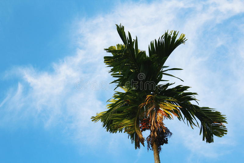 Sky blue stock images