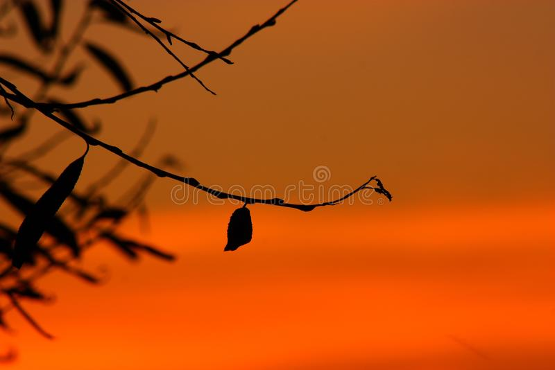 Sky, Branch, Orange, Silhouette royalty free stock images