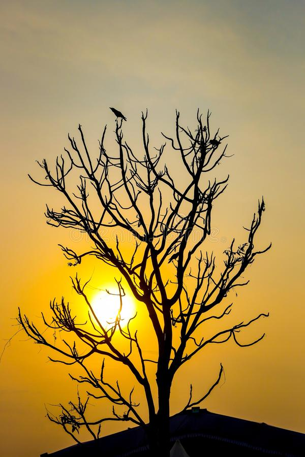 Sky, Branch, Tree, Morning stock photo