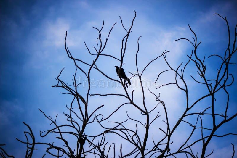 Sky, Branch, Twig, Tree Free Public Domain Cc0 Image