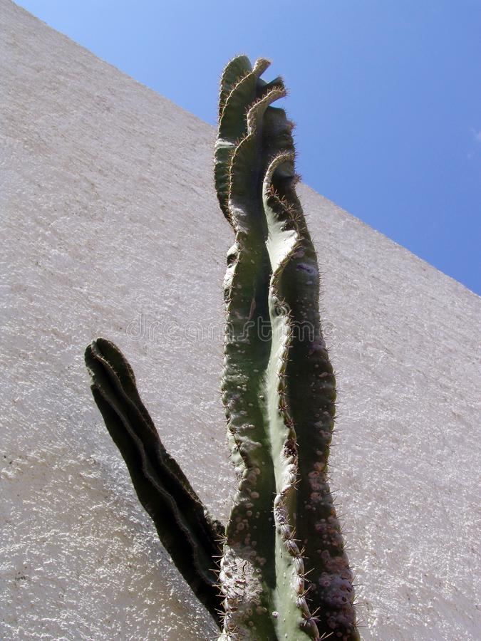 Sky Cactus Stock Photos