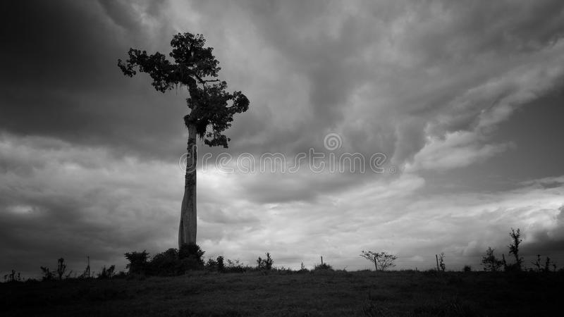 Sky, Cloud, Black And White, Monochrome Photography royalty free stock photos