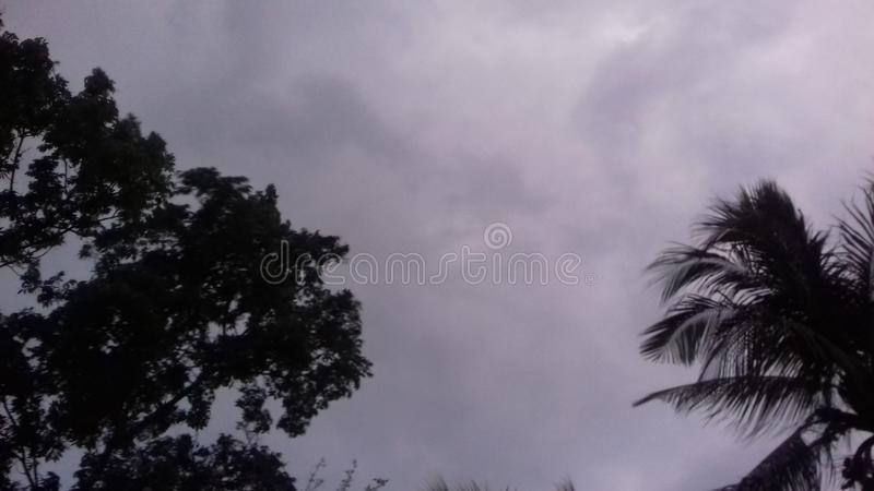 Sky  cloudy evening tree afternoon royalty free stock photos