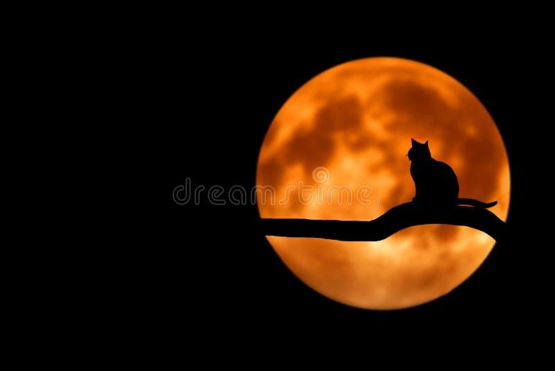 Sky, Computer Wallpaper, Moon, Darkness stock images