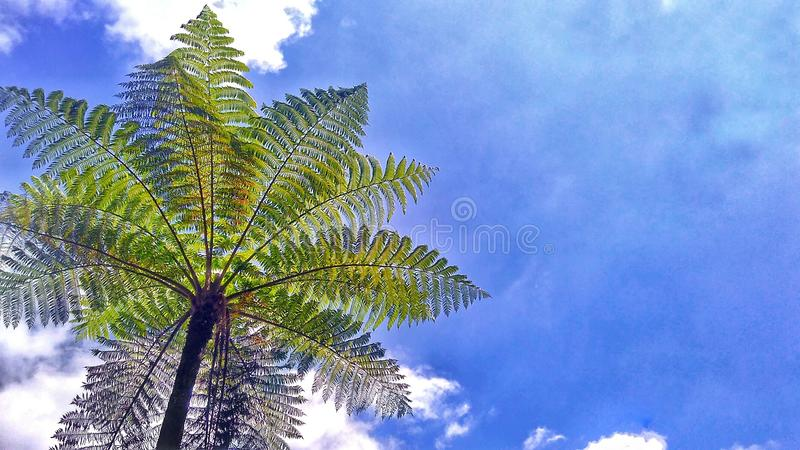 Sky and Cyantheacea royalty free stock images