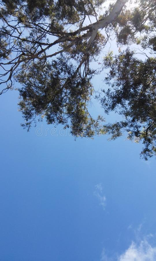 Sky and Enviromental. Trees are refreshing and incredible in summer. Brazil! An example of this is the eucalyptus canopy royalty free stock images